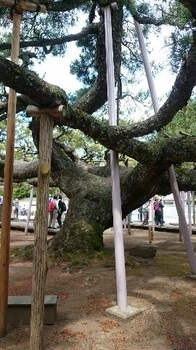 1497003831384[1].jpg 歩こう会 「 善養寺 」 影向の松 17-06.09.jpg
