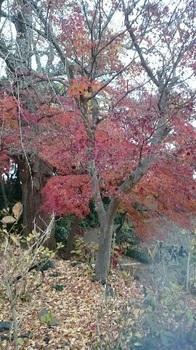 歩こう会 本土寺 8 1512874899387.jpg 17-12.8.jpg