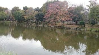 歩こう会「悲しい伝説を訪ねて」 じゅん菜池緑地 17-11.10 1510363935202.jpg