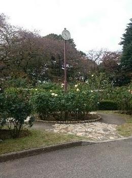 歩こう会「悲しい伝説を訪ねて」 里見公園 17-11.10 1510363873281.jpg